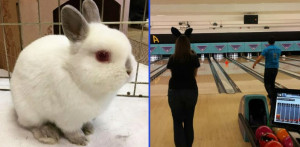 ohrr-bowling-for-bunnies-2