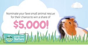 Nominate Ohio House Rabbit Rescue to help the bunnies get a share of the $5,000!