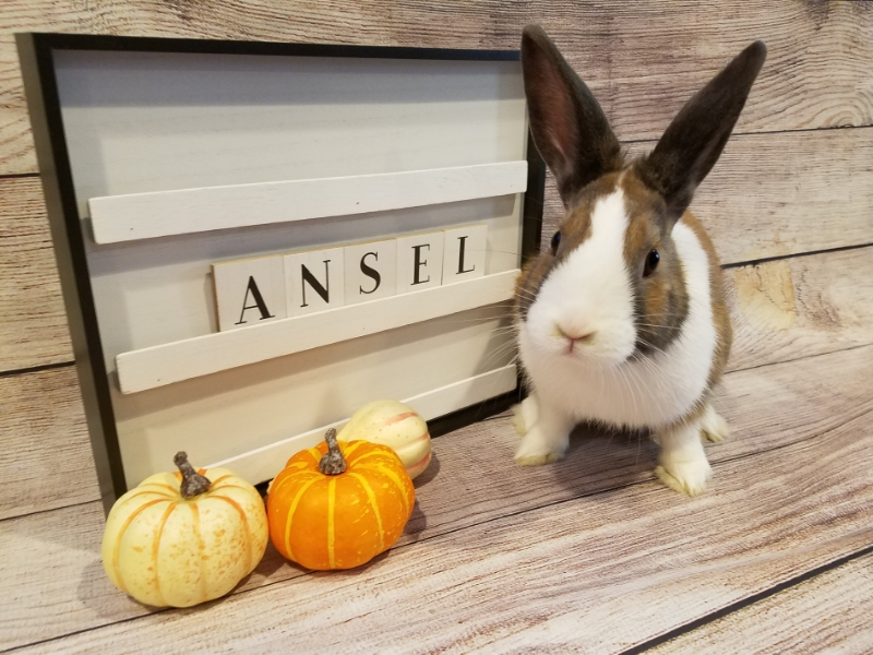 Get to Know Our Adoptable Bunnies